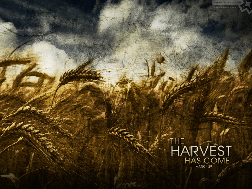 No. 055 - The Harvest Has Come (www.thinkradiant.com)